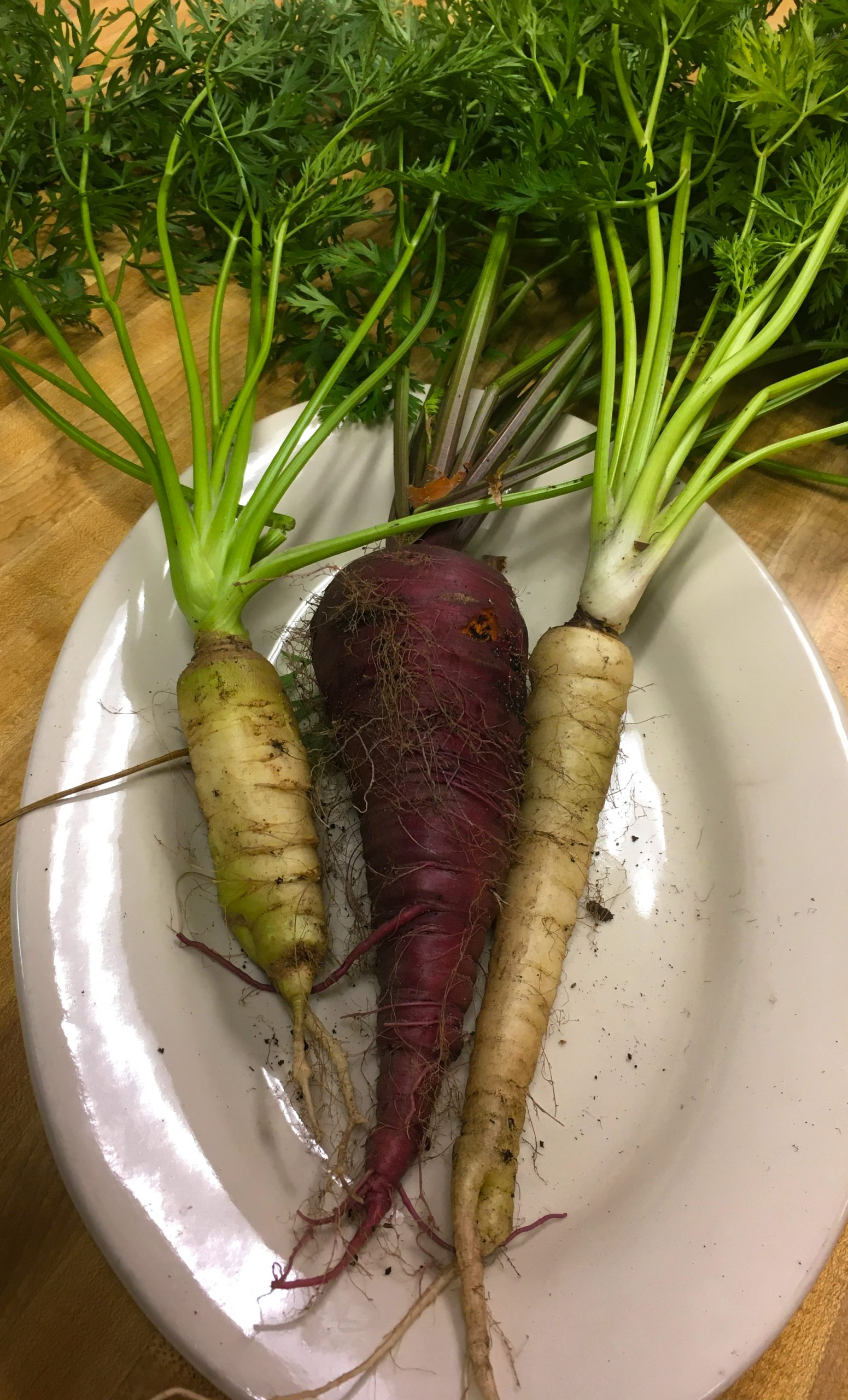 heirloom-carrots