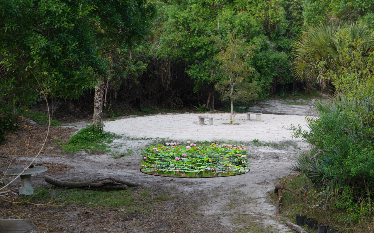 lotus-prop2