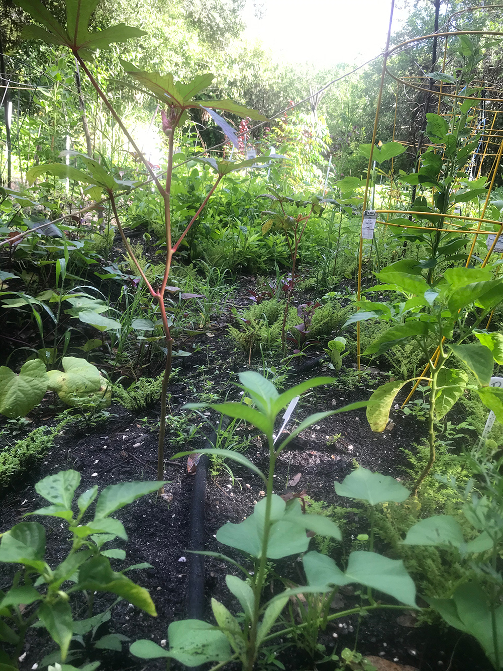community garden IMG_2362